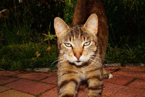 Cat Cat'S Eyes Curious Hungry Cat Face Fur Cute