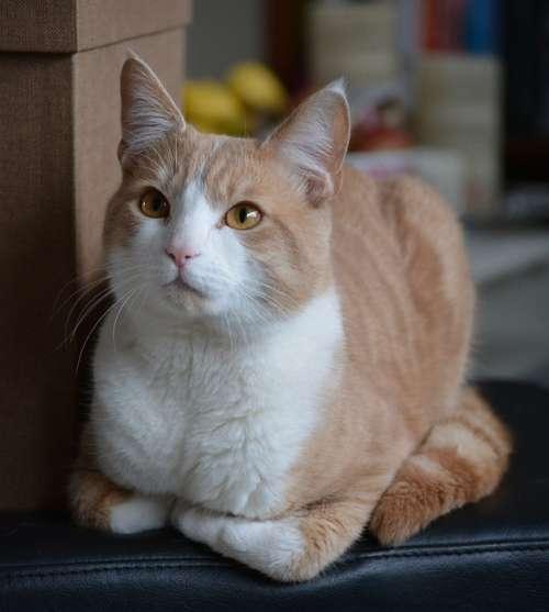 Cat Animal Red