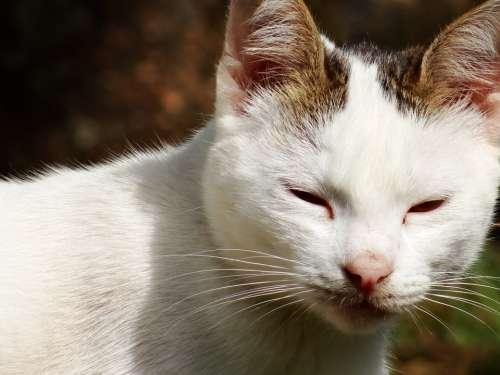 Cat Feline Animal Kitten Pet Feline Stopped
