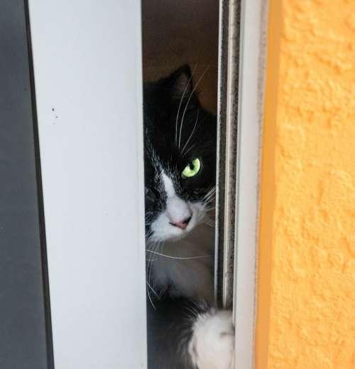 Cat Playful Cute Domestic Feline Pet Animal