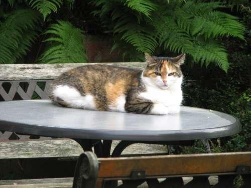 Cat Animal Portrait Domestic Cat Lucky Cat Mieze