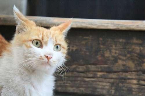 Cat Kitty Animal Gaze