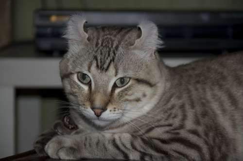 Cat Kitten Animals