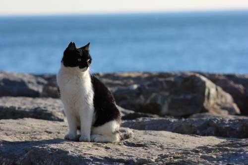 Cat Domestic Cat Sea