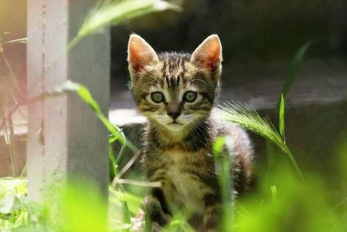 Cat Kitty Cute Little Small Animal Feline