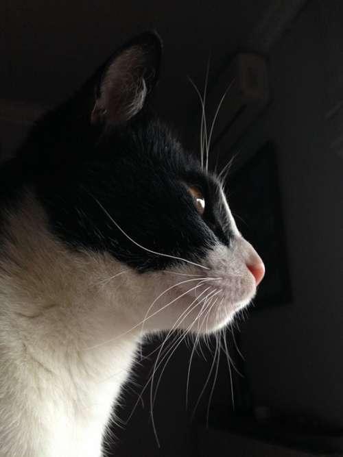 Cat Animal Black White Feline Pet Fauna Animals