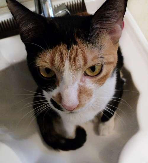 Cat Sink Animal Pet Cute Kitty Feline Bathroom