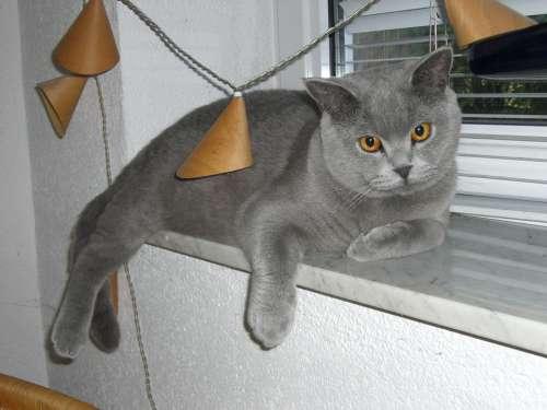 Cat Window Sill Camacho View Trust