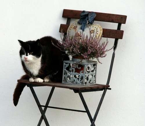 Cat Chair Decoration Animal Domestic Cat