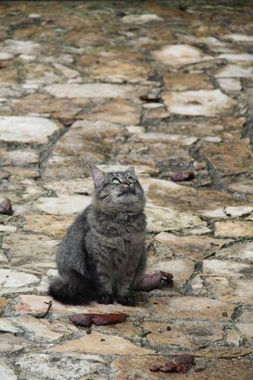 Cat Gata Pet Feline Animal Kitten Fauna
