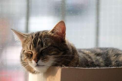 Cat Rest Sleep Nap