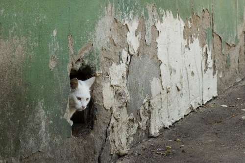 Cat Wall Hole Surprise Old Ruin