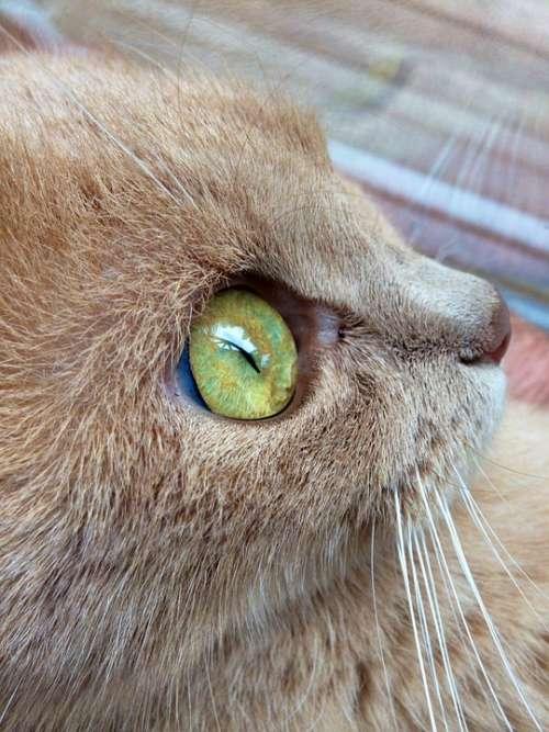 Cat Eye Cat'S Eye Close Up Domestic Cat Beautiful