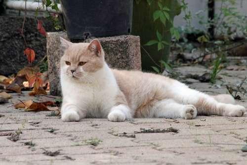 Cat Animals Kitten Animal Hair Cute Cat Face