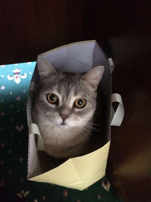 Cat Cat In The Bag