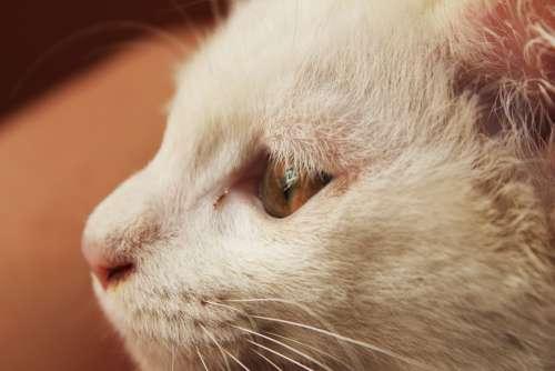 Cat Animal White Cat