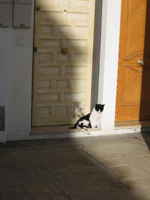 Cat Shadow Door
