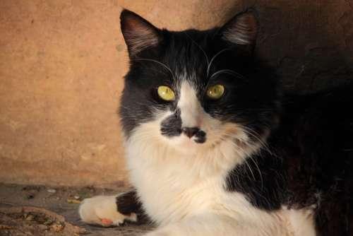 Cat Feline Black And White Nature White Black