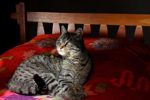 Cat Feline Attentive Pet Animals Cats Rest