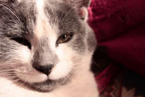 Cat Pet Feline Look Cats