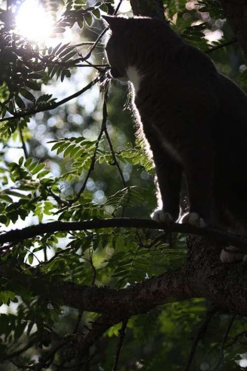 Cat Titus Animals Feline Tree Cat In Tree Sun