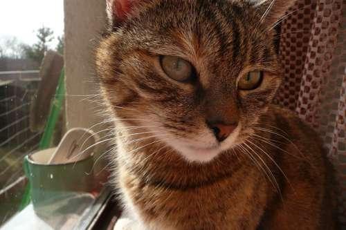 Cat Background Animal Pet Domestic Macro
