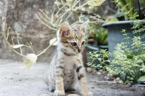 Cat Small Cat