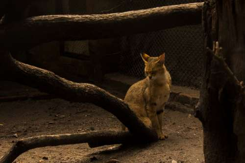 Cat Wood Shy Alone Poor Scrubby