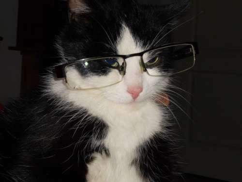 Cat With Glasses Cat Crafty Cat