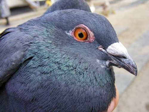 Catching Dove Hand Nice Pigeon Birds