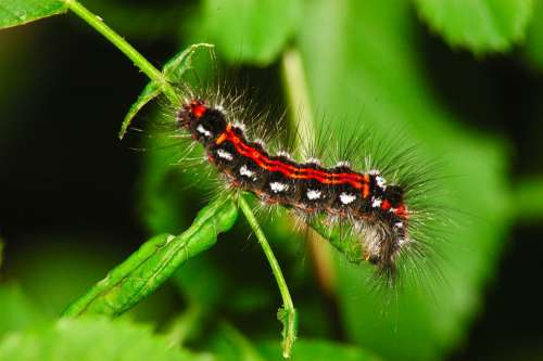 Caterpillar Green Hair Animal