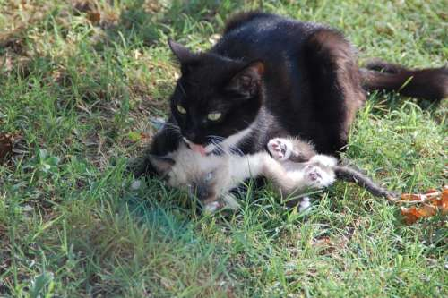 Cats Mom Cat And Her Calf Animal Tenderness Animals