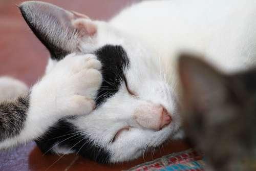 Cats Brother Care Feline Feline Animal Sleeping