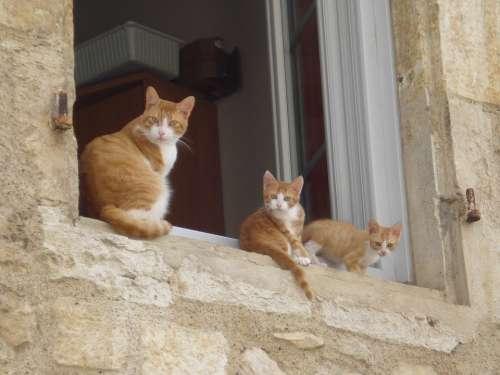 Cats Animal Pet Kitten Animals Nature Feline
