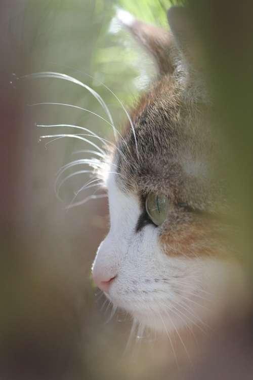 Cat'S Eye Domestic Cat Head Profile Cat