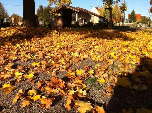 Cemetery Autumn Transience Leaves Golden Autumn