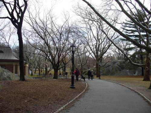 Central Park New York Manhattan Park Trees Winter