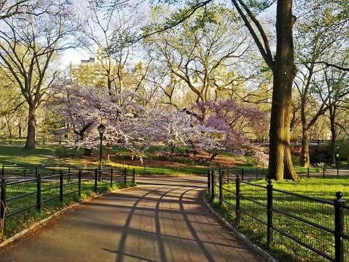 Central Park New York Manhattan City Outdoors Nyc