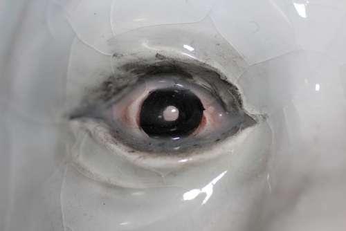 Ceramics Eye Eyeball Look See Observe Arts