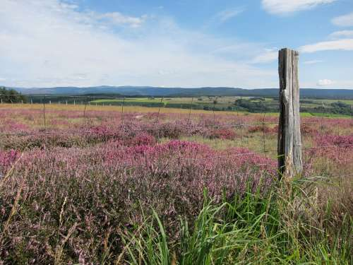 Cévennes Lande Wild Flora