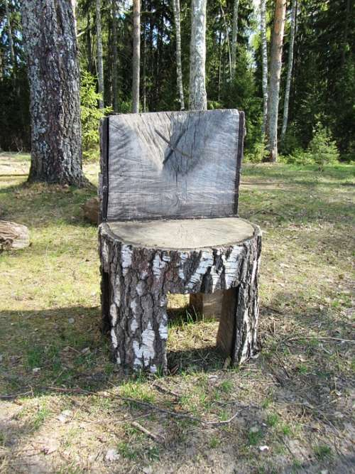 Chair Forest Tree