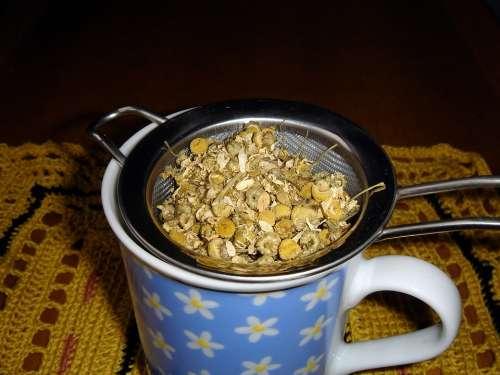 Chamomile Chamomile Blossoms Chamomile Tea Healthy