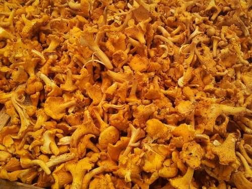 Chanterelles Market Chanterelle Egg Sponge Mushroom