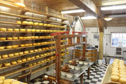 Cheese Cheese Dairy Cheese Production Cheeses