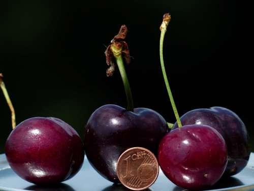 Cherries Large Huge Size Comparison Cent Penny