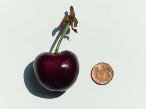 Cherry Large Huge Size Comparison Cent Penny Coin