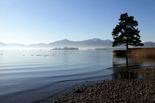 Chiemsee Upper Bavaria Tree Lake Bank Distant
