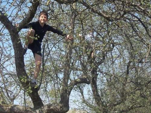 Child Boy Fun Climb Tree
