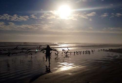 Child Playing Birds Beach Ocean Water Sky