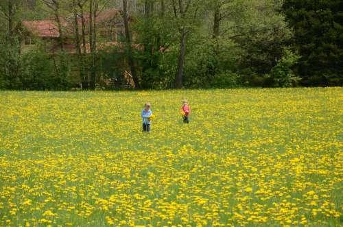 Children Meadow Dandelion Flower Flowers Plant